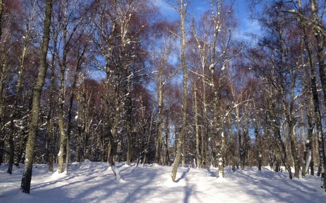 Living in the Cairngorms